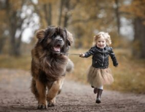 Child Friendly Dogs, The Best Breeds by Susie's Pet Care