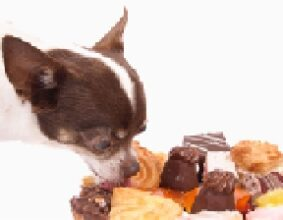 What foods are dangerous to pets?