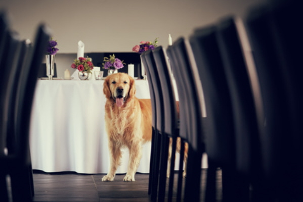 Cute Dog at Wedding